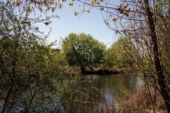 201230 - Pond - Alley_Pond_Environmental_Center